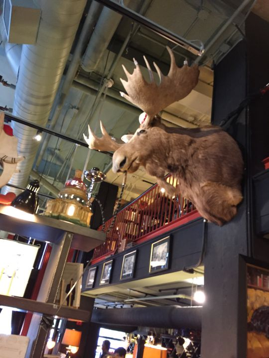 the-book-exchange-moose