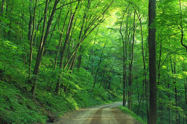 Woods in the Twin Tiers