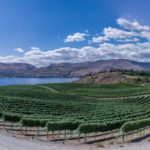 vineyard by lake