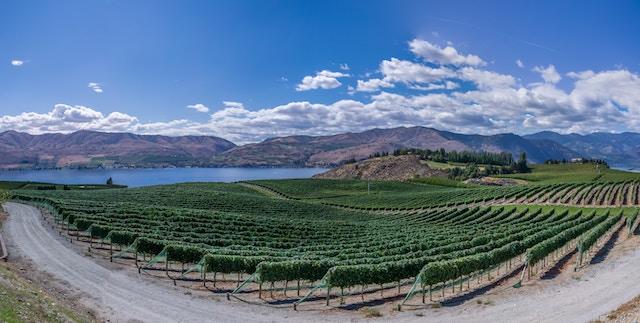 vineyard by lake