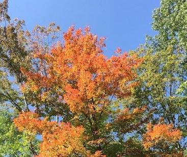 Fall Tree Chautauqua County, New York