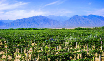 Eight Facts About the Chinese Wine Industry