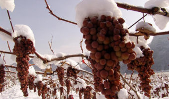 Chinese Wine, the Love Affair Few Know About